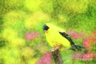 Photograph - Goldfinch by Debbie Portwood