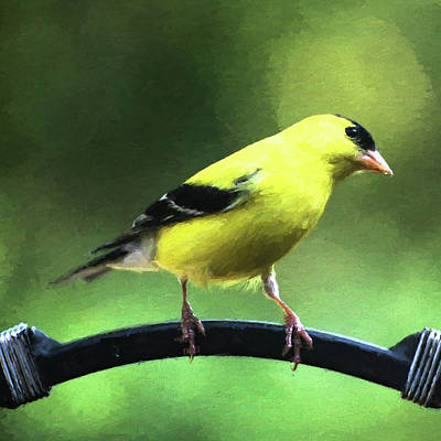 Digital Art - Goldfinch by Denise Beverly