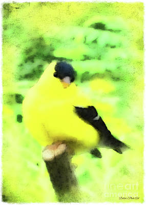 Photograph - Goldfinch - Digital Effect I by Debbie Portwood