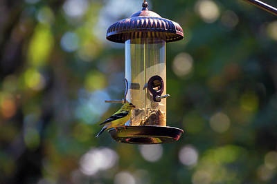 Wall Art - Photograph - Goldfinch Feeding On Birdfeeder by David Gn