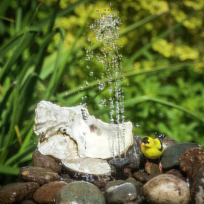 Impressionist Landscapes - Goldfinch in the Fountain by Marci Potts
