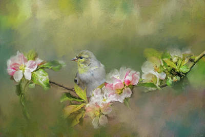 Photograph - Goldfinch In The Garden 2 by Jai Johnson