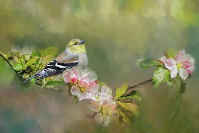 Photograph - Goldfinch In The Garden by Jai Johnson