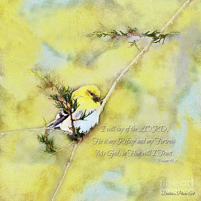 Photograph - Goldfinch On A Cedar Twig - Square by Debbie Portwood