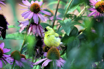 Goldfinch On Coneflowers Art Print