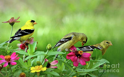 Photograph - Goldfinch Party by Nava Thompson