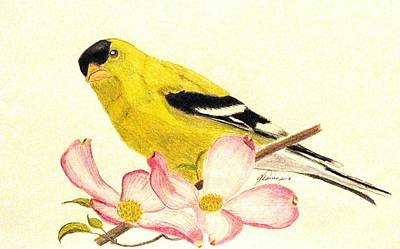 Goldfinch Drawing - Goldfinch Spring by Angela Davies
