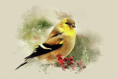 Mixed Media - Goldfinch Watercolor Art by Christina Rollo