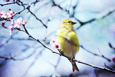 Photograph - Goldfinch With Texture by Trina Ansel