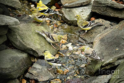 Goldfinches Galore Print by Jemmy Archer