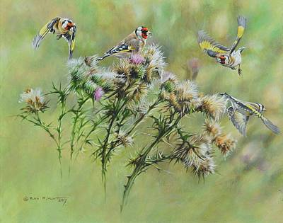 Painting - Goldfinches On Thistle by Alan M Hunt