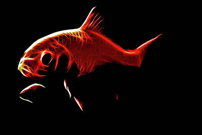 Goldfish Digital Art - Goldfish 1 by Tilly Williams