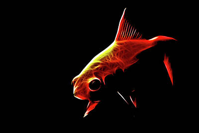 Goldfish 2 Art Print by Tilly Williams