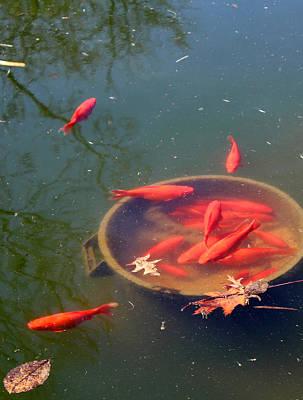 Photograph - Goldfish Bowl by Robin Street-Morris
