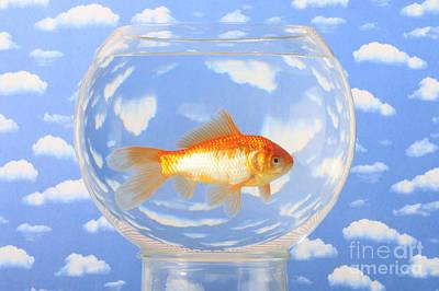 Fish Bowl Photograph - Goldfish by Christine Steimer