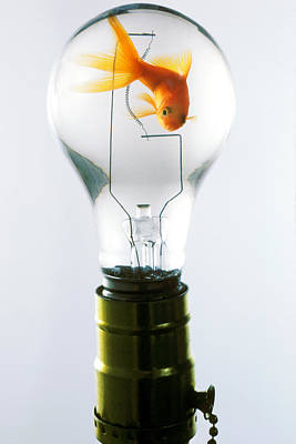 Glass Art Photograph - Goldfish In Light Bulb  by Garry Gay