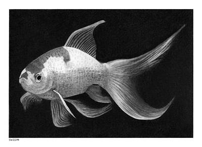 Drawing - Goldfish by Scott Woyak