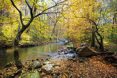 Photograph - Golds Along The Stream by Debra and Dave Vanderlaan