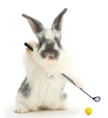Photograph - Golfing Bunny by Warren Photographic