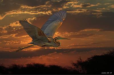 Digital Art - Goliath Heron At Sunset by Larry Linton