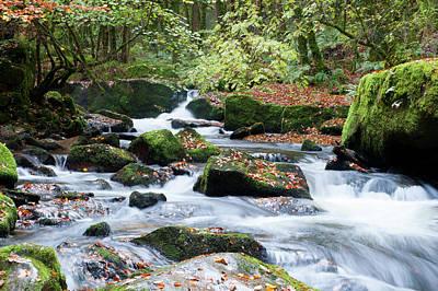 Photograph - Golitha Falls V by Helen Northcott