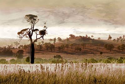 Gondwana Boab Art Print