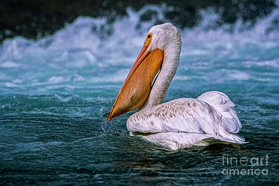 Photograph - Gone Fishin' by Brad Allen Fine Art