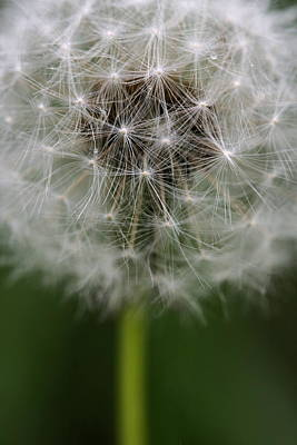 Photograph - Gone To Seed - Color by Angela Rath