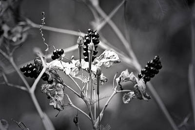 Bringing The Outdoors In - Gone to Seed Berries and Vines by Teresa Mucha