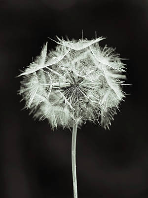 Photograph - Gone To Seed by Brooke T Ryan