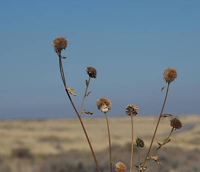 Photograph - Gone To Seed by Eric Tressler