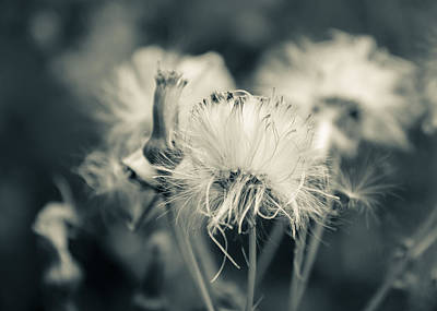 Photograph - Gone To Seed by Joni Eskridge