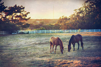 Pasture Digital Art - Good Company by Laurie Search