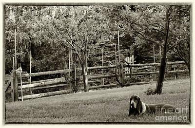 Photograph - Good Dog Annie by Karen Adams