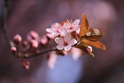 Photograph - Good Friday Blossoms by Lynn Hopwood