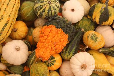 Natural White For Decorating Photograph - Good Gourd by Robert Wilder Jr