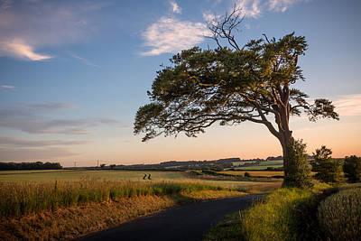 Sandwich Photograph - Good Looking Tree by Ian Hufton