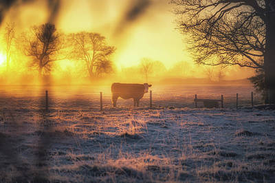 Bovine Photograph - Good Mooorning by Chris Fletcher