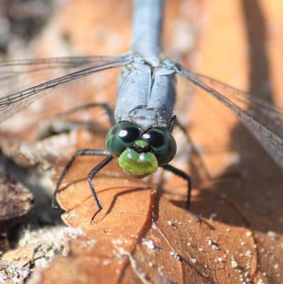 Dragonflies Photograph - Good Morning by Carol Groenen