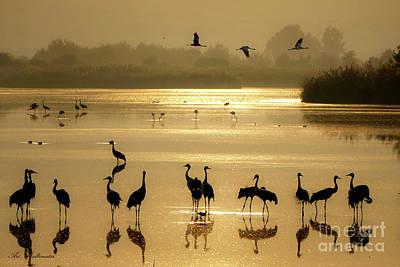 Photograph - Good Morning Chula Lake by Arik Baltinester