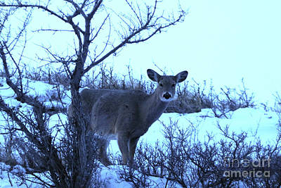 Photograph - Good Morning Deer by Alyce Taylor