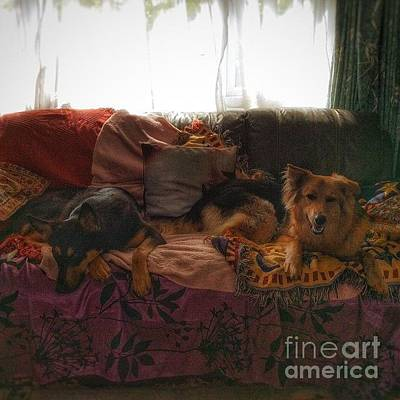 Dog Photograph - Good Morning From The Puppies!  #dogs by Isabella F Abbie Shores