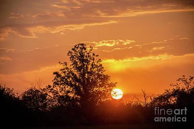 Photograph - Good Morning Sunshine by Cheryl Baxter
