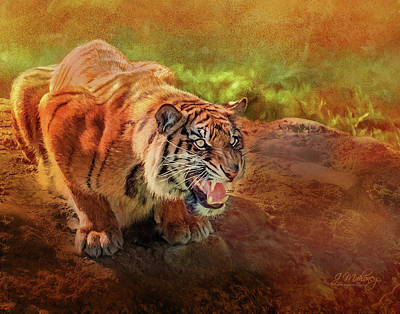 Photograph - Good Morning Tiger by Jeanette Mahoney