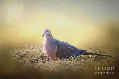 Pigeon Mixed Media - Good Mourning Dove by Sharon McConnell