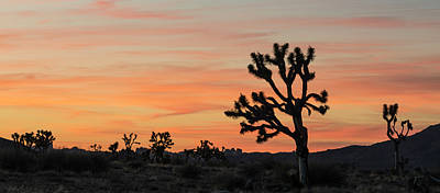 Photograph - Good Night Joshua Tree by Loree Johnson