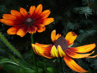 Photograph - Good Night Susan - Botanical by Margie Avellino