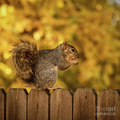 Photograph - Good Peanut by Robert Bales