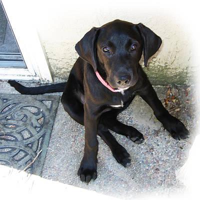 Black Lab Digital Art - Good Puppy by Rhonda Chase