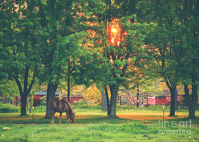 Photograph - Goodnight Horse by Viviana  Nadowski